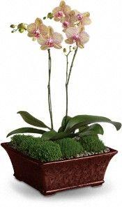 Divine Orchid Plants