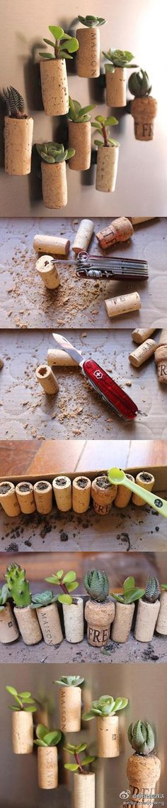 Repurposed corks into mini tiny succulent pot planters; upcycled garden display; Upcycle, Recycle, Salvage, diy, thrift, flea, repurpose, refashion!  For vintage ideas and goods shop at Estate ReSale & ReDesign, Bonita Springs, FL