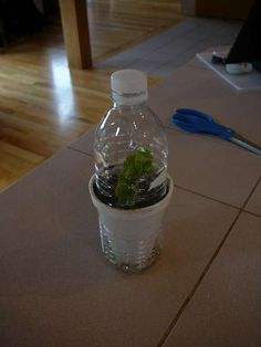 Self watering thermal insulated greenhouse for seedlings/cuttings from water bottle.
