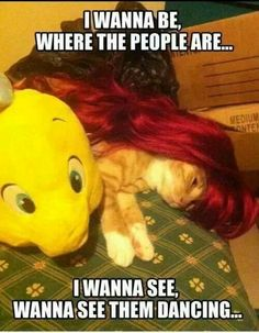 Okay.. Little mermaid cat