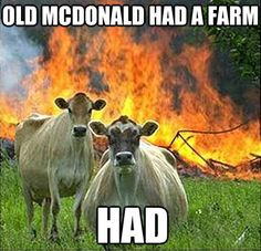 evil-cows steak, farm, funny animals, burger, funny pictures, funni, thought, joke, animal memes