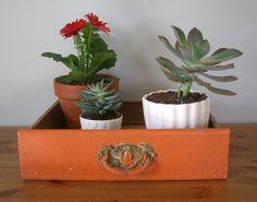 Vintage Drawer as Planter Box