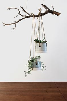 hanging planters on tree branch