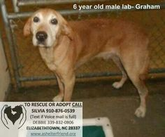 URGENT DOGS in Elizabethtown, NC. HAVE TO CLEAR @ LEAST 4 KENNELS (more would be better) to avoid any being PTS.