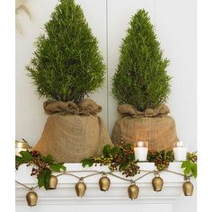 Burlap wrapped indoor trees.