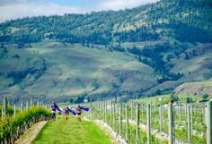 6 Reasons To Run The Half Corked Marathon | BCLiving