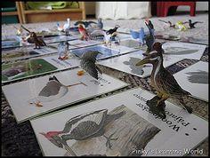 bird studi, unit studi, bird unit