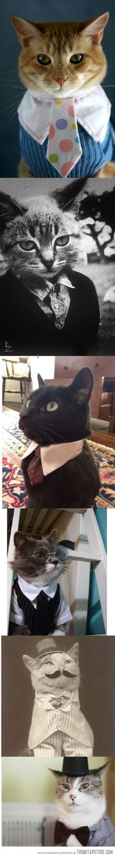 Classy cats (maybe, but they don't look happy)