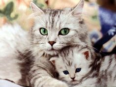 The Mommy and the Baby!