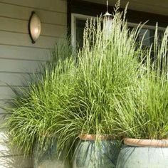 Tall Grass Planters
