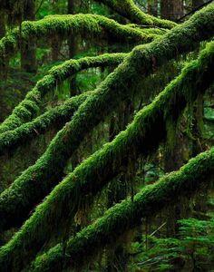 green green green :)