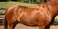 What to tell your Veterinarian if your horse has colic!