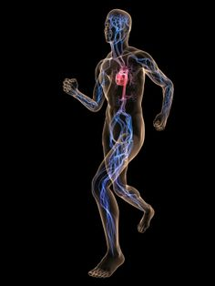 L-arginine is a superior sports supplement