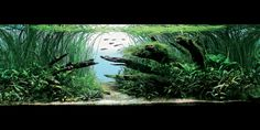 Nature Aquarium inspiration for 100 gal. South American Tank. More
