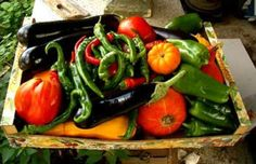 size plant, size garden, famili size, vegetables garden, veget garden, garden size