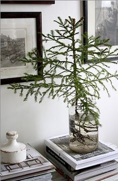Earthy. simple. water, plant, christmas tree ideas, jar, christma tree, branch, christmas trees, the holiday, the roots