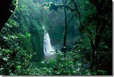 The Amazon Rainforest, South America