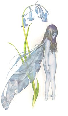 Tags: Brian Froud  Bluebell  Faerie  Faery  Fairy  Flower