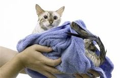 Should you expose your cat to water? Click through to find out!