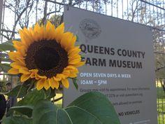 Queens County Farm Museum