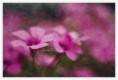 Pink Floral Photo Spring Digital painting by BitsofLifeImages, $30.00