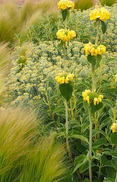Jardin Toledo 2009: detalle plantación patio. Jardín mediterraneo, grava, jardín seco. Gravel garden, xeriscaping, dry garden, mediterranean garden. www.flickr.com/...
