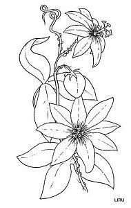 flores para pintar en tela-passiflora.jpg