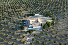 Cortijos en el olivar