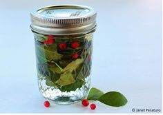 Wintergreen: how to harvest it and make an alcohol extract - One Acre Farm