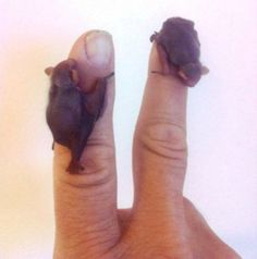 baby bats @OlgaMaría Carcamo