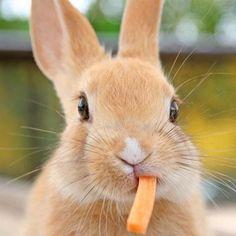rabbit, little girls, bunni eat, funny bunnies, lips