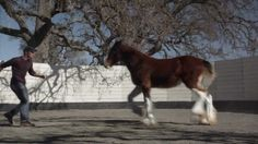2013 Budweiser Super Bowl Ad — Extended Version of The Clydesdales: Brotherhood