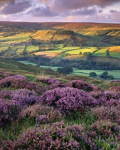 Landscape - Yorkshir