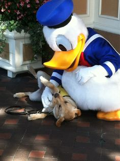 Donald pets a service dog. This is so cute!