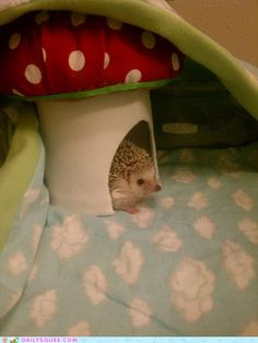 Love the hedgehog and his home!