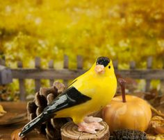 A mini gold finch is singing in the fall fairy garden.