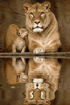 Mommy and Baby Lion