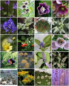 To build a beautiful garden of love and magic, the following herbs can be planted on a night when the Moon is full, daffodil, hibiscus, gentian, geranium, gardenia, coriander, basil, Adam and Eve, catnip, cherry, gentian, love seed, jasmine, lavender, poppy, valerian, vanilla, yarrow, willow, pansy, peppermint, lemon verbena, love seed, maidenhair, strawberry, thyme, hibiscus and hyacinth.