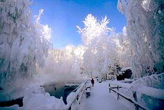 canada, alaska, winter wonderland, trees, forest