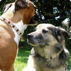 macrame dog collars (find them here http://www.earthmoonbeam.com/hempdogcollar.html)