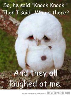Sad little owl…but cute!