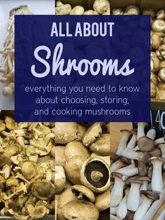 All About Shrooms: how to choose, store, and cook different types of mushrooms