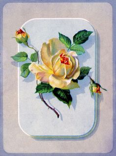 *The Graphics Fairy LLC*: Vintage Graphic - Pretty Yellow Rose
