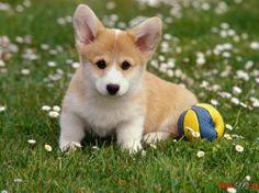Dog breeds look photo