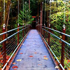 Bellevue Botanical Gardens: The Ravine Experience Path