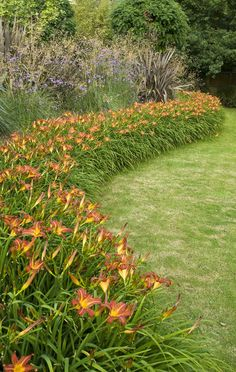Hemerocallis Edge backed by miscanthus and verbena (i think). maybe for north side of lot?