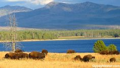 Learn how to volunteer at a National Park (and live for free!) See more: http://www.gypsynester.com/national-park-volunteer.htm #travel #volunteer #usa