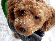 Winter Safety For Dogs: Top 10 Cold Weather Tips For Dog Owners