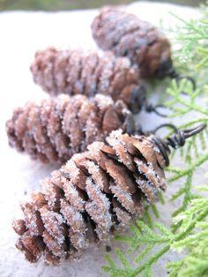 """""""Sugared"""" Pine Cones"""