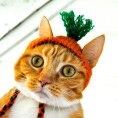 Carrot Costume - Cat or Dog. $12.00, via Etsy.